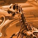 Galerie de paléontologie au Muséum d'Histoire Naturelle de Paris
