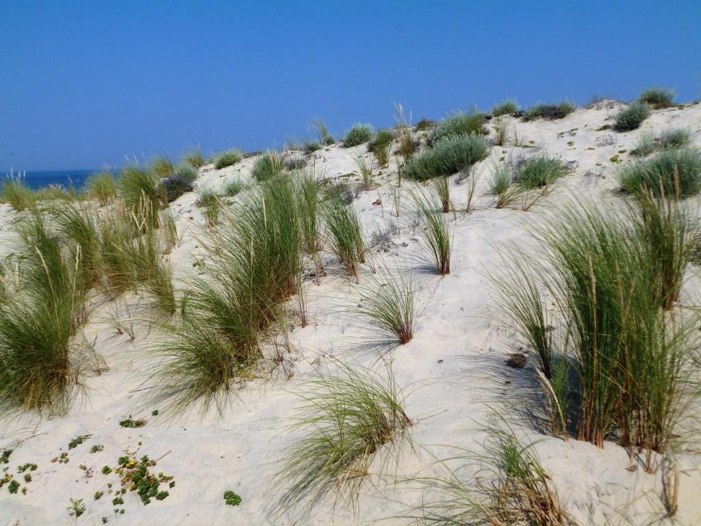Dunes à Carcans